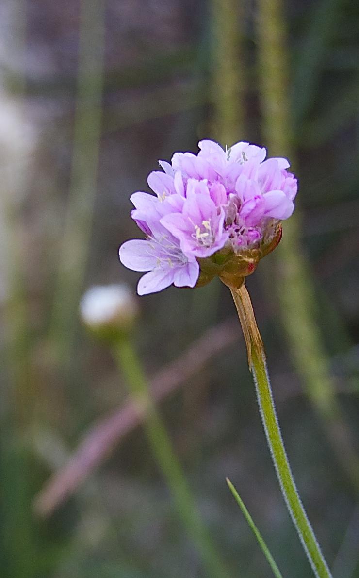 flower3-close