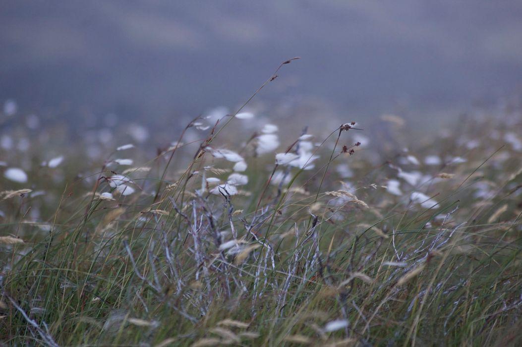 bogcotton-landscape